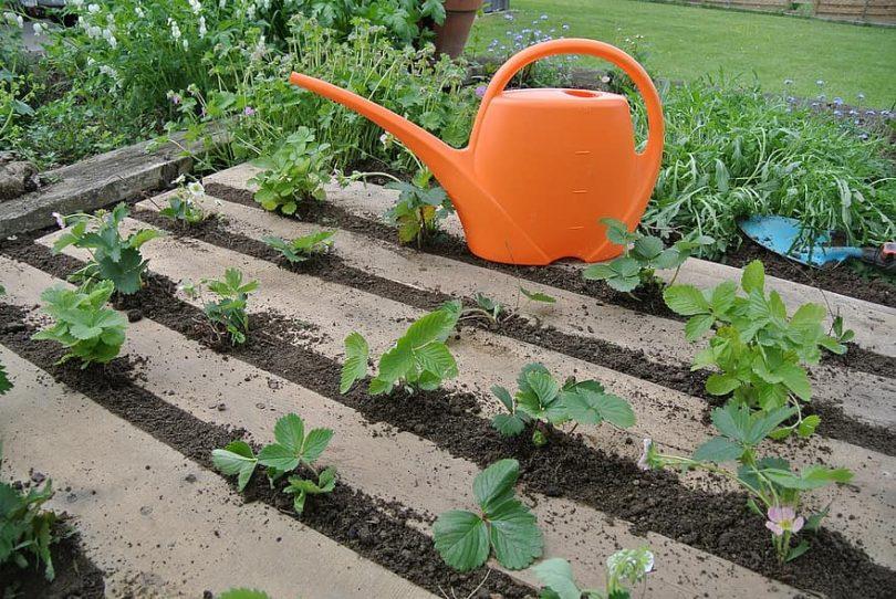 géotextile dans le jardinage